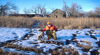 Kansas pheasant hunting packages